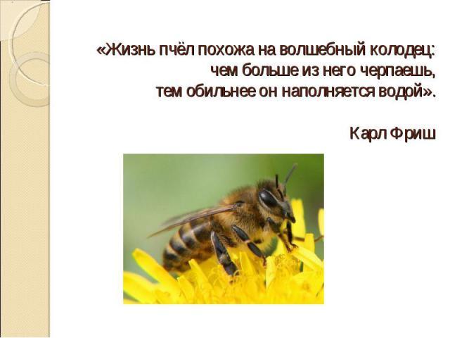 «Жизнь пчёл похожа на волшебный колодец: чем больше из него черпаешь, тем обильнее он наполняется водой». Карл Фриш