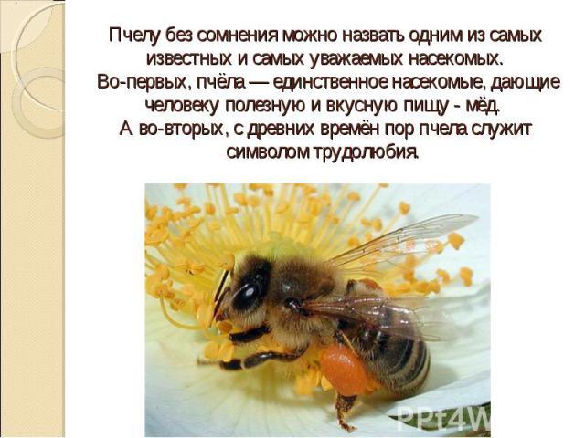 Пчелу без сомнения можно назвать одним из самых известных и самых уважаемых насекомых. Во-первых, пчёла — единственное насекомые, дающие человеку полезную и вкусную пищу - мёд. А во-вторых, с древних времён пор пчела служит символом трудолюбия.