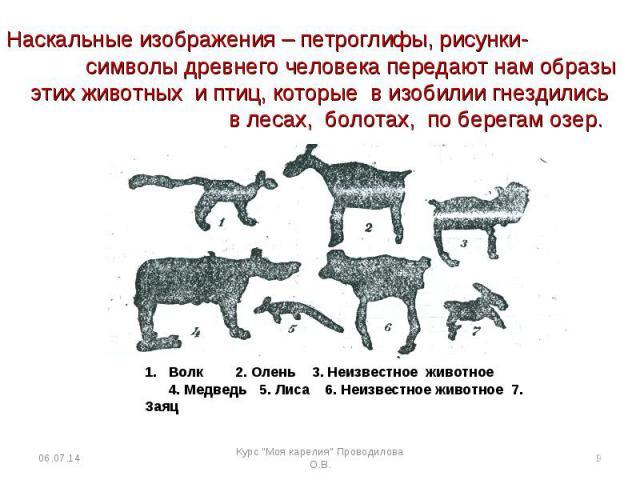 Наскальные изображения – петроглифы, рисунки- символы древнего человека передают нам образы этих животных и птиц, которые в изобилии гнездились в лесах, болотах, по берегам озер. 1. Волк 2. Олень 3. Неизвестное животное 4. Медведь 5. Лиса 6. Неизвес…