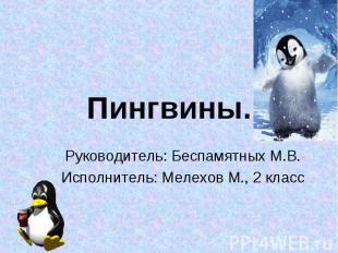Пингвины. Руководитель: Беспамятных М.В. Исполнитель: Мелехов М., 2 класс