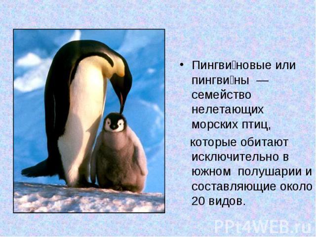 Пингви новые или пингви ны — семейство нелетающих морских птиц, которые обитают исключительно в южном полушарии и составляющие около 20 видов.