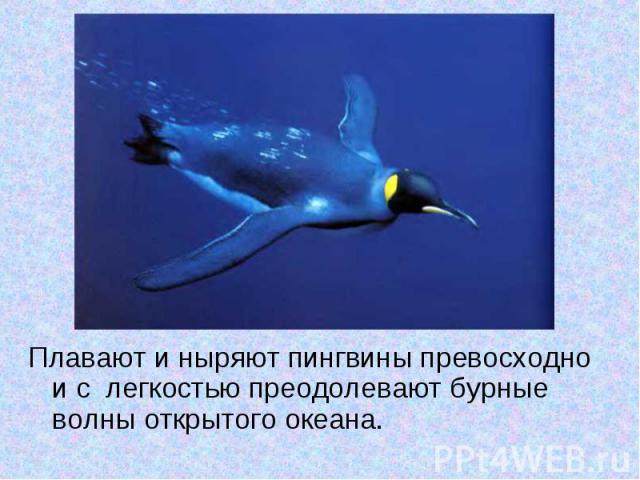 Плавают и ныряют пингвины превосходно и с легкостью преодолевают бурные волны открытого океана.