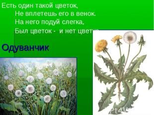 Одуванчик Есть один такой цветок, Не вплетешь его в венок. На него подуй слегка,