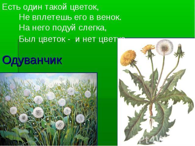 Одуванчик Есть один такой цветок, Не вплетешь его в венок. На него подуй слегка, Был цветок - и нет цветка