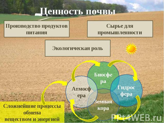 Ценность почвы Производство продуктов питания Сырье для промышленности Экологическая роль Сложнейшие процессы обмена веществом и энергией