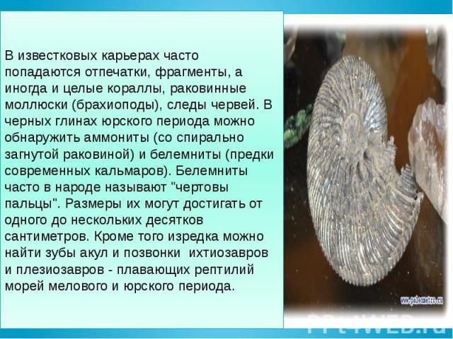 В известковых карьерах часто попадаются отпечатки, фрагменты, а иногда и целые кораллы, раковинные моллюски (брахиоподы), следы червей. В черных глинах юрского периода можно обнаружить аммониты (со спирально загнутой раковиной) и белемниты (предки с…
