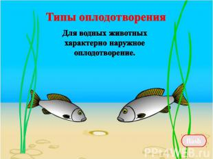 Типы оплодотворения Для водных животных характерно наружное оплодотворение.