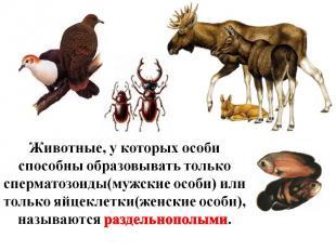 Животные, у которых особи способны образовывать только сперматозоиды(мужские осо