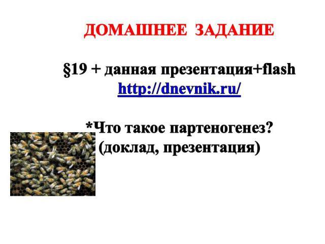 ДОМАШНЕЕ ЗАДАНИЕ §19 + данная презентация+flash http://dnevnik.ru/ *Что такое партеногенез? (доклад, презентация)