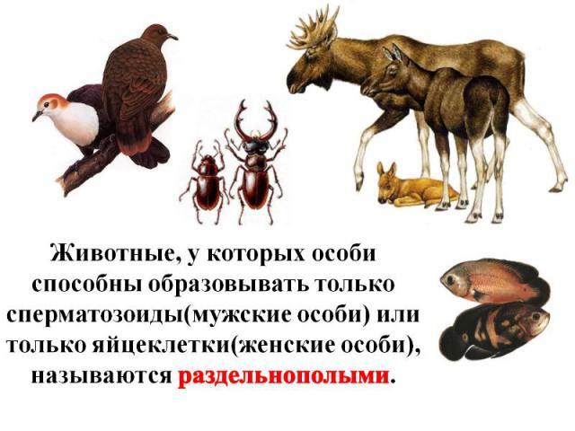 Животные, у которых особи способны образовывать только сперматозоиды(мужские особи) или только яйцеклетки(женские особи), называются раздельнополыми.