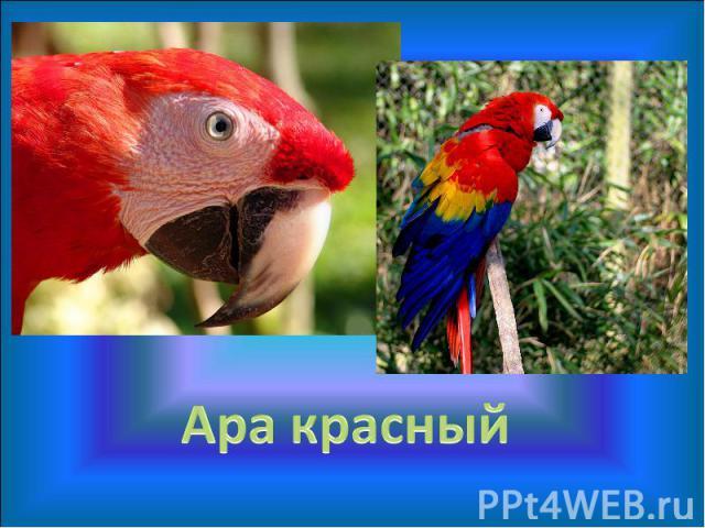 Попугаи занесенные в красную книгу