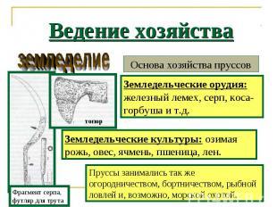 Ведение хозяйства Основа хозяйства пруссов Земледельческие орудия: железный леме