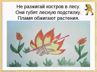 Не разжигай костров в лесу. Они губят лесную подстилку. Пламя обжигают растения.
