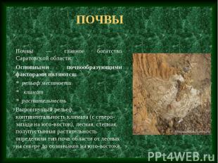 Почвы Почвы — главное богатство Саратовской области. Основными почвообразующими