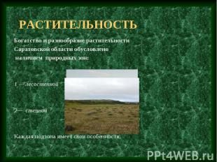 растительность Богатство и разнообразие растительности Саратовской области обусл
