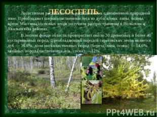 Лесостепь. Лесостепная растительность расположена в одноименной природной зоне.