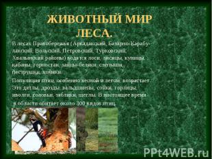 Животный мир леса. В лесах Правобережья (Аркадакский, Базарно-Карабу-лакский, Во