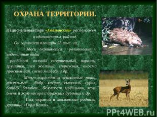 Охрана территории. Национальный парк «Хвалынский» расположен в одноименном район