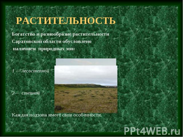 растительность Богатство и разнообразие растительности Саратовской области обусловлено наличием природных зон: 1 — лесостепной 2— степной Каждая подзона имеет свои особенности.