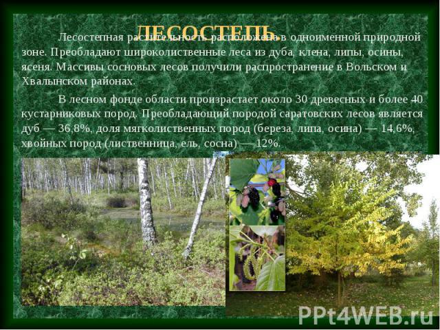 Лесостепь. Лесостепная растительность расположена в одноименной природной зоне. Преобладают широколиственные леса из дуба, клена, липы, осины, ясеня. Массивы сосновых лесов получили распространение в Вольском и Хвалынском районах. В лесном фонде обл…