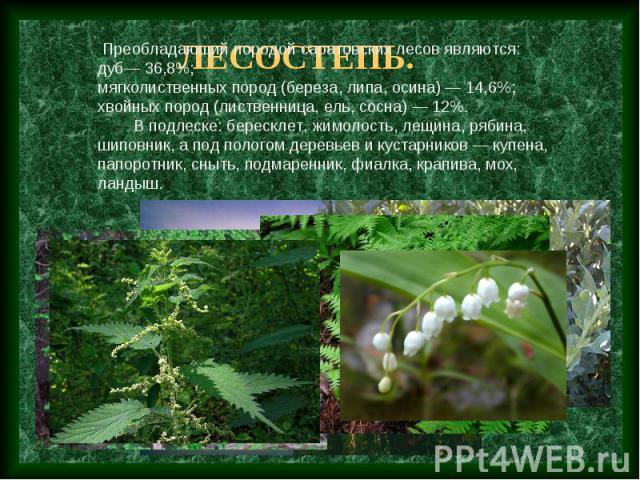 Преобладающий породой саратовских лесов являются: дуб— 36,8%; мягколиственных пород (береза, липа, осина) — 14,6%; хвойных пород (лиственница, ель, сосна) — 12%. В подлеске: бересклет, жимолость, лещина, рябина, шиповник, а под пологом деревьев и ку…