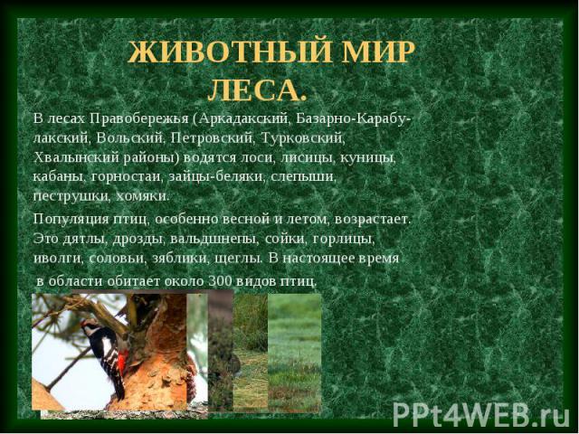 Животный мир леса. В лесах Правобережья (Аркадакский, Базарно-Карабу-лакский, Вольский, Петровский, Турковский, Хвалынский районы) водятся лоси, лисицы, куницы, кабаны, горностаи, зайцы-беляки, слепыши, пеструшки, хомяки. Популяция птиц, особенно ве…