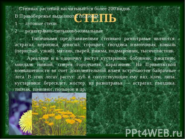 Степных растений насчитывается более 200 видов. В Правобережье выделяют 2 подзоны: 1 — луговые степи 2 — разнотравно-типчаково-ковыльные Типичными представителями степного разнотравья являются: астрагал, вероника, девясил, горицвет, гвоздика изменчи…
