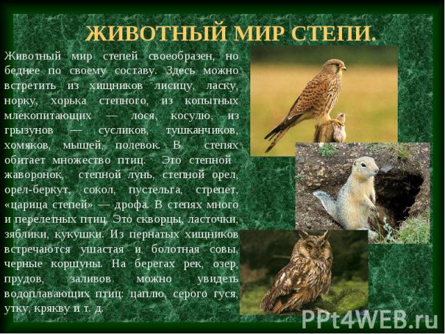 Животный мир степи. Животный мир степей своеобразен, но беднее по своему составу. Здесь можно встретить из хищников лисицу, ласку, норку, хорька степного, из копытных млекопитающих — лося, косулю, из грызунов — сусликов, тушканчиков, хомяков, мышей,…