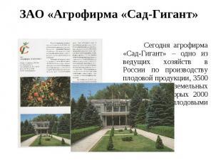 ЗАО «Агрофирма «Сад-Гигант» Сегодня агрофирма «Сад-Гигант» – одно из ведущих хоз