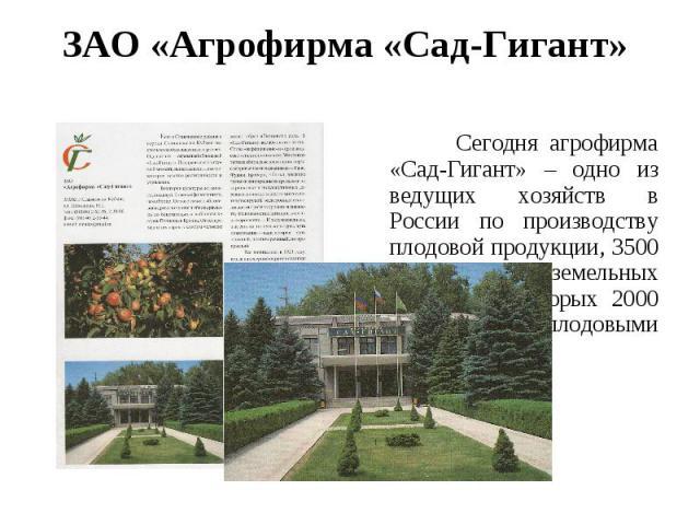 ЗАО «Агрофирма «Сад-Гигант» Сегодня агрофирма «Сад-Гигант» – одно из ведущих хозяйств в России по производству плодовой продукции, 3500 гектаров земельных угодий, из которых 2000 занято плодовыми насаждениями.