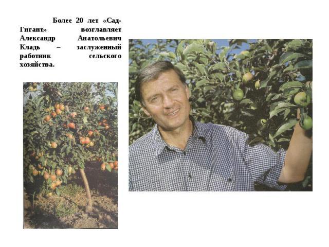 Более 20 лет «Сад-Гигант» возглавляет Александр Анатольевич Кладь – заслуженный работник сельского хозяйства.