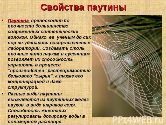 какова прочность паутины паука