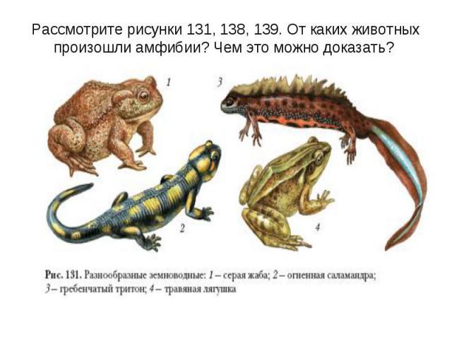 Рассмотрите рисунки 131, 138, 139. От каких животных произошли амфибии? Чем это можно доказать?