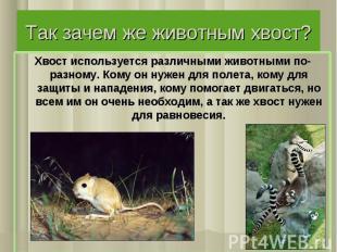Так зачем же животным хвост? Хвост используется различными животными по-разному.