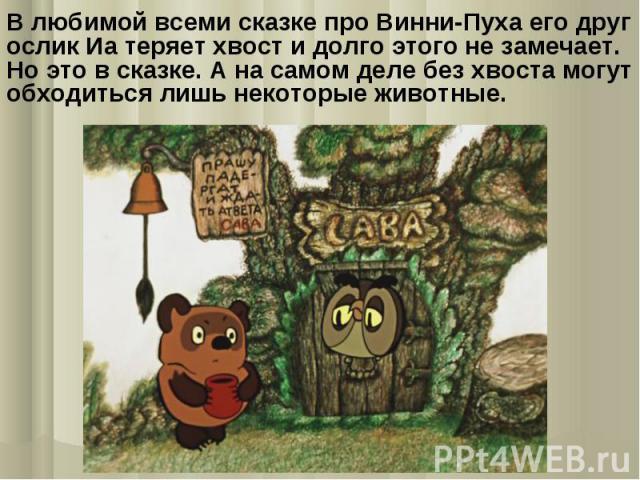 В любимой всеми сказке про Винни-Пуха его друг ослик Иа теряет хвост и долго этого не замечает. Но это в сказке. А на самом деле без хвоста могут обходиться лишь некоторые животные.