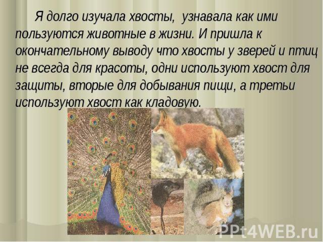 Я долго изучала хвосты, узнавала как ими пользуются животные в жизни. И пришла к окончательному выводу что хвосты у зверей и птиц не всегда для красоты, одни используют хвост для защиты, вторые для добывания пищи, а третьи используют хвост как кладовую.
