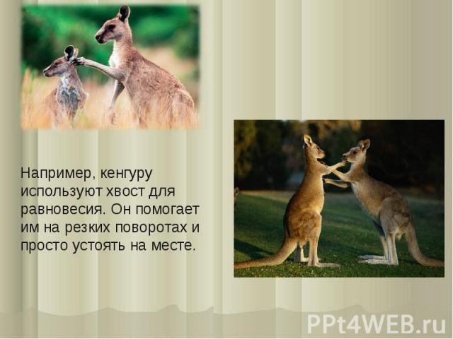 Например, кенгуру используют хвост для равновесия. Он помогает им на резких поворотах и просто устоять на месте.