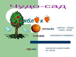 Чудо-сад «аппель» – яблоко «сина» - Китай итальянский «помидоро» латинский «скор