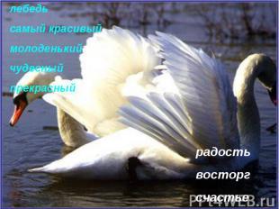 лебедь самый красивый молоденький чудесный прекрасный радость восторг счастье