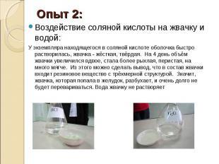 Опыт 2: Воздействие соляной кислоты на жвачку и водой: У экземпляра находящегося