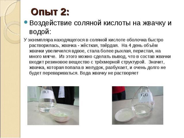 Опыт 2: Воздействие соляной кислоты на жвачку и водой: У экземпляра находящегося в соляной кислоте оболочка быстро растворилась, жвачка - жёсткая, твёрдая. На 4 день объём жвачки увеличился вдвое, стала более рыхлая, перистая, на много мягче. Из это…