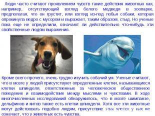 Люди часто считают проявлением чувств такие действия животных как, например, отс