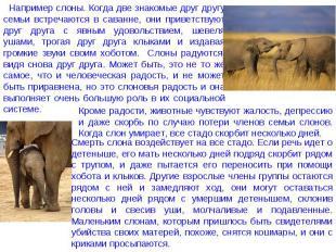 Например слоны. Когда две знакомые друг другу семьи встречаются в саванне, они п