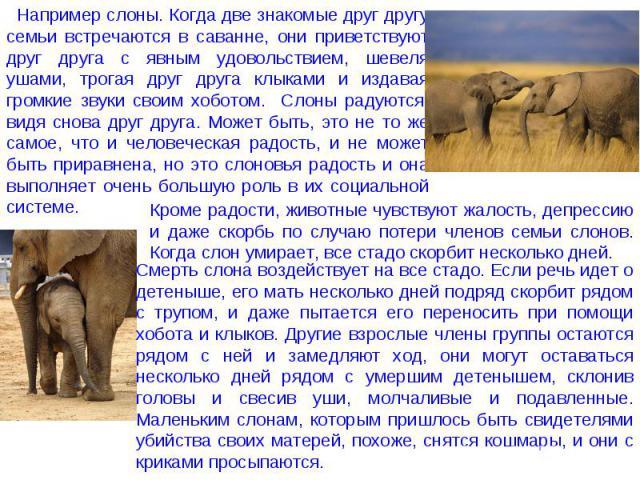 Например слоны. Когда две знакомые друг другу семьи встречаются в саванне, они приветствуют друг друга с явным удовольствием, шевеля ушами, трогая друг друга клыками и издавая громкие звуки своим хоботом. Слоны радуются, видя снова друг друга. Может…