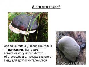 А это что такое? Это тоже грибы. Древесные грибы — трутовики. Трутовики помогают