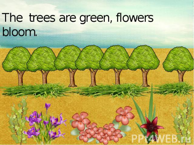 The trees are green, flowers bloom.