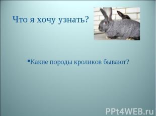 Что я хочу узнать? Какие породы кроликов бывают?