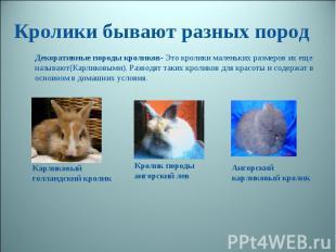 Кролики бывают разных пород Декоративные породы кроликов- Это кролики маленьких