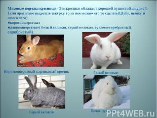 Меховые породы кроликов- Эти кролики обладают хорошей пушистой шкуркой. Если пра