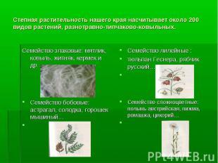 Степная растительность нашего края насчитывает около 200 видов растений, разнотр